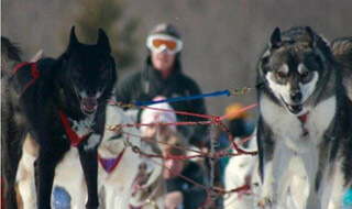 Door County Sled Dogs Photo